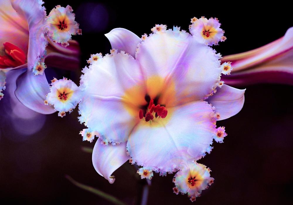 Flower (Fractal Incidents) - Valdevia - Eduardo Valdés-Hevia