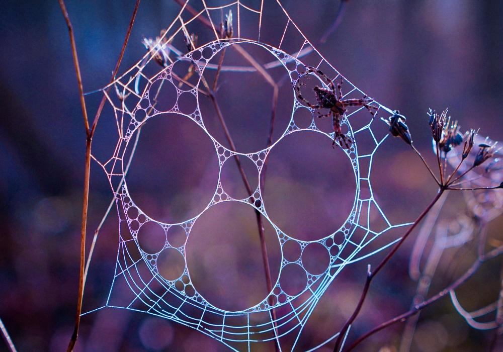 Spiderweb (Fractal Incidents) - Valdevia - Eduardo Valdés-Hevia